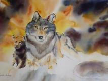 Loups 48 x 38 cm