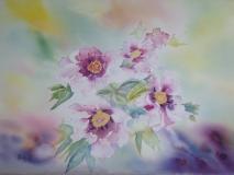 Pivoines roses 51 x 36 cm